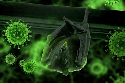 bat- Image by Syaibatul Hamdi